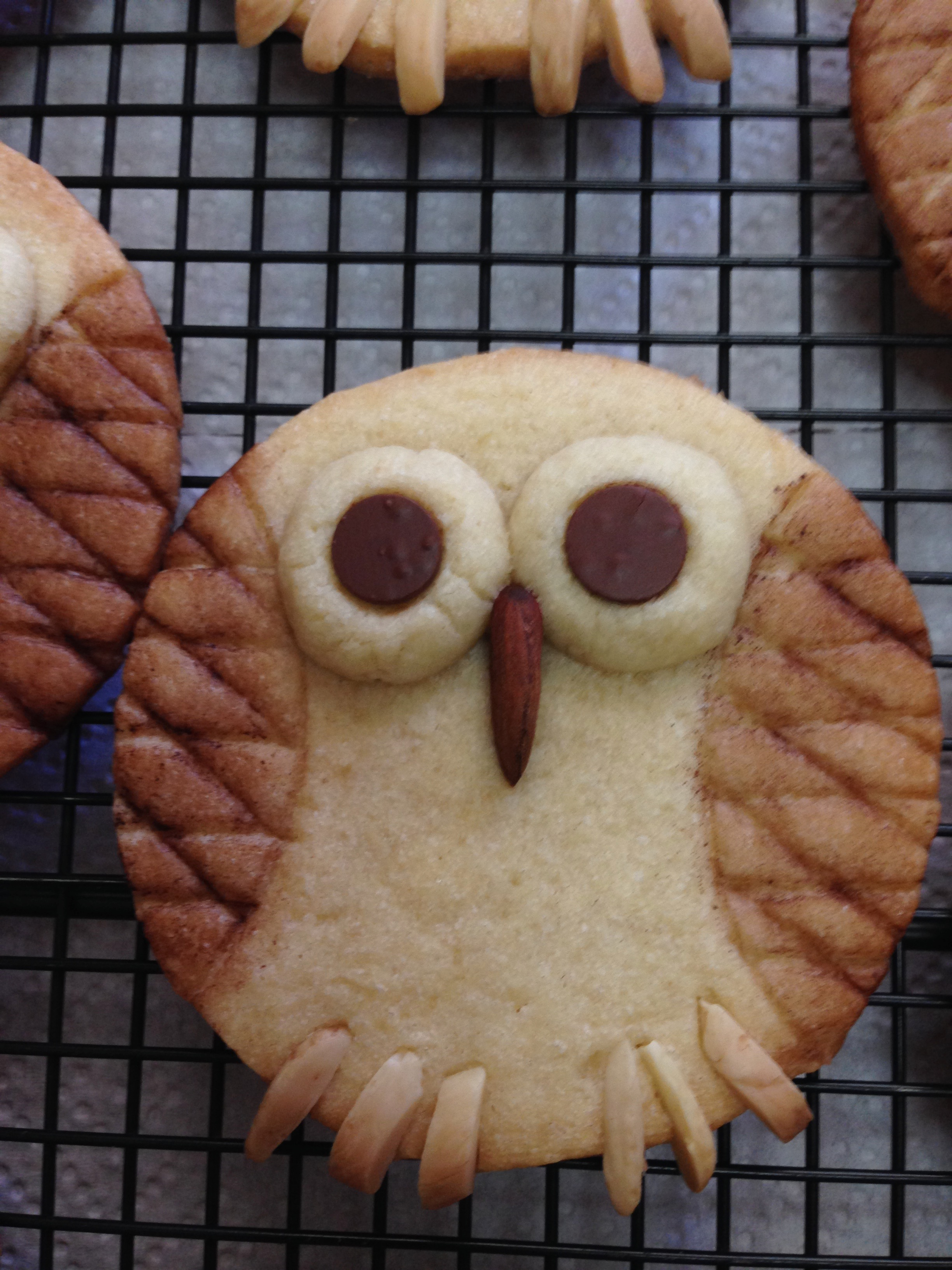 Owl Almond Cookie