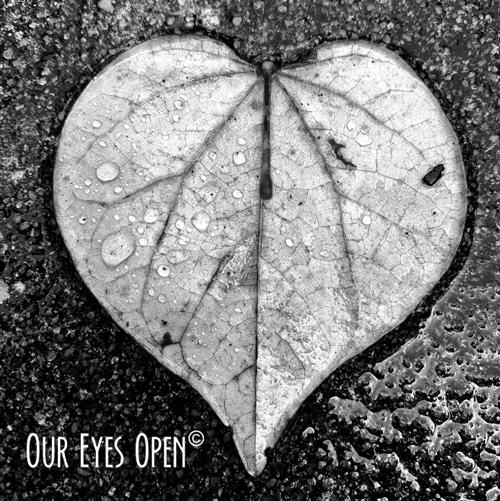 Heart shape leaf found during a light rain