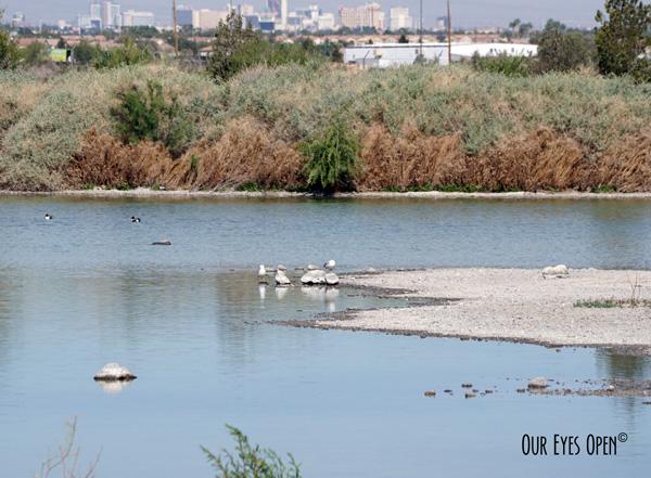 Henderson Birding Preserve
