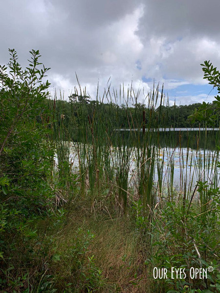 University of Florida Lake
