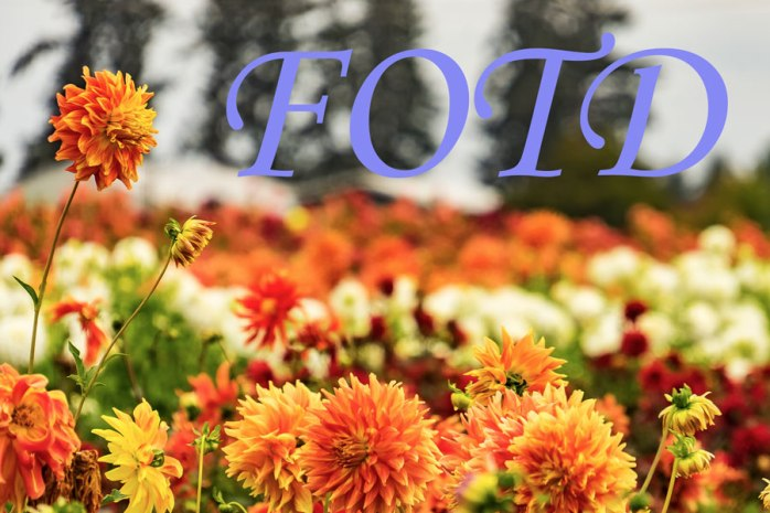 Cee's Flower of the Day (FOTD) Challenge Badge