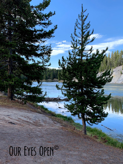 Tree lined bank of the Yellowstone River in Yellowstone National Park at Otter Creek Picnic Area.