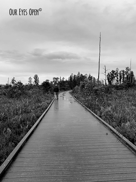 Chesser Island Boardwalk at Okefenokee Wildlife Refuge in South George. At the end of the boardwalk is a 4-story covered lookout tower.