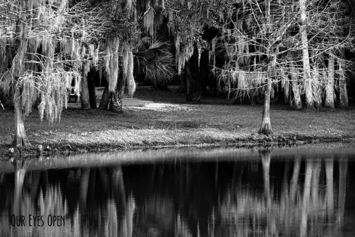 Cypress Trees reflecting off the water at Gemini Springs Park, Florida