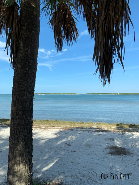 View of a palm tree in the foreground and the Intercoastal Waterway, Tampa Bay (background) shot from Arrowhead picnic area, Fort Desoto Park, Pinellas County, Florida.