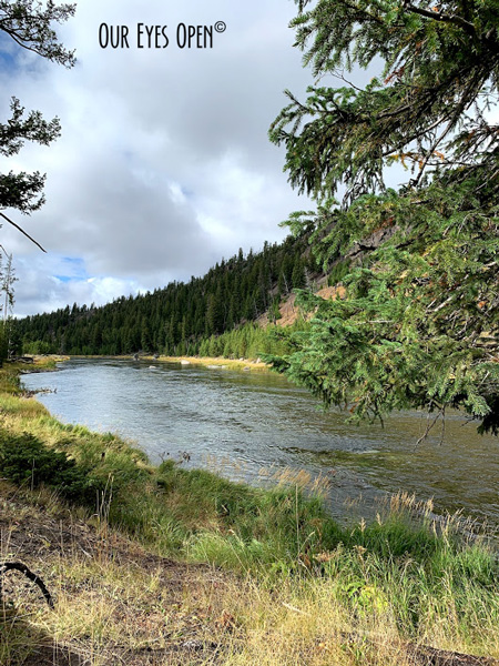 The Madison River on the west side of Yellowstone National Park just outside of West Yellowstone where you cross from Montana into Wyoming.