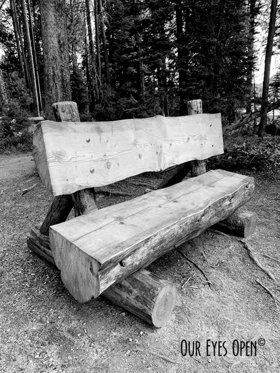 Natural bench made out of a tree on String Lake in Grand Teton National Park.