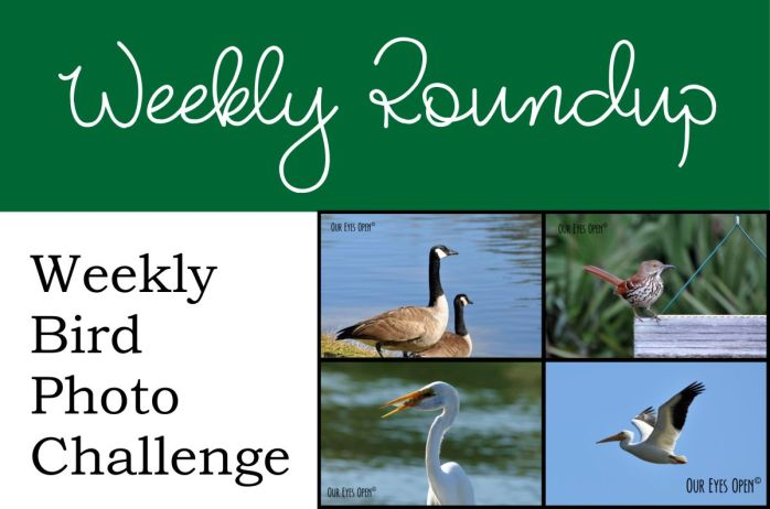 Bird Weekly Roundup logo