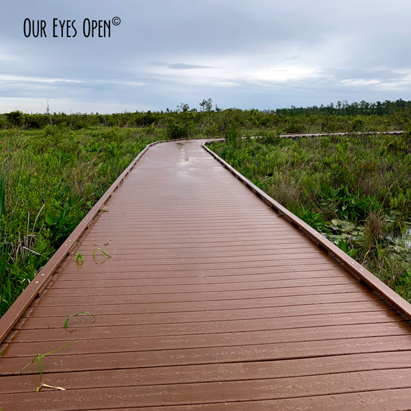 View along the Chesser Boardwalk in Okefenokee Wildlife Management Area in Georgia.  Cloudy skies loomed and it had been raining.