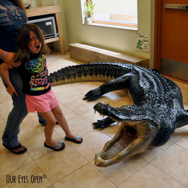 Terrified granddaughter at a science museum in Cocoa Beach where there was a life size American Alligator made of resin.  It sure looked real!