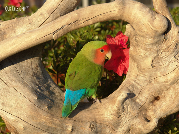 Tweety the Love Bird loved the garden and his feathers were multiple shades of green, peach and teal blue.