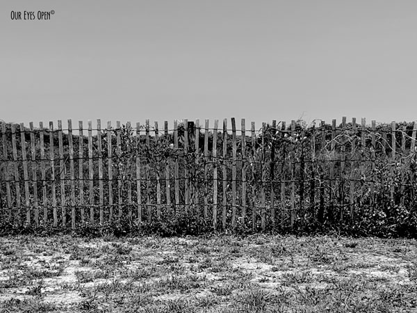 Wooden fence at Little Talbot Island State Park to keep humans off the dunes.