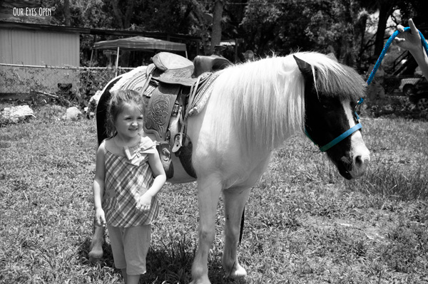 Pony that was hired to be at my granddaughters 4th birthday party.