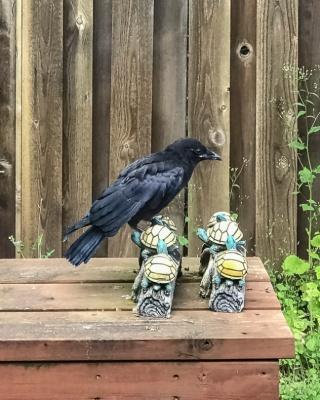 Cee's American Crow