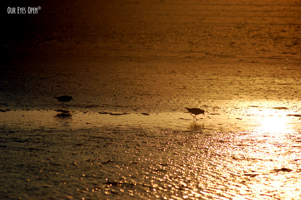 Sunset at Little Talbot Island State Park with 2 bird silhouettes feeding on the sand.