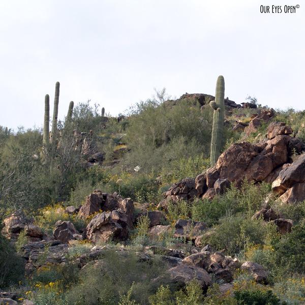Rocky desert mountain area in the White Tank Mountain Park featuring cacti.