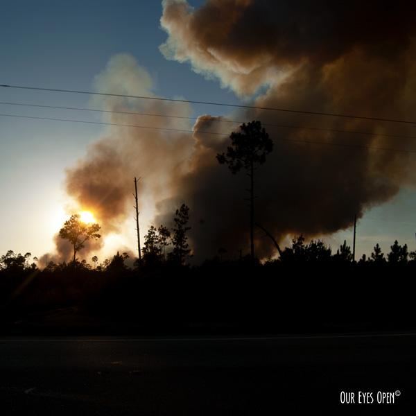 Controlled burn in Ocala National Forest near sundown.