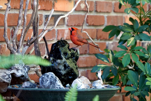 Northern Cardinal perched on a homemade stone fountain.