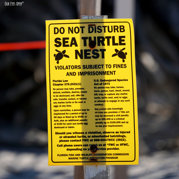 DO NOT DISTURB Sea Turtle Nest sign displayed at Little Talbot Island State Park in Jacksonville, Florida.