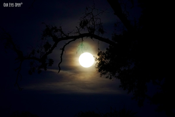 May supermoon rising through the clouds  with a creepy tree branch in the foreground.